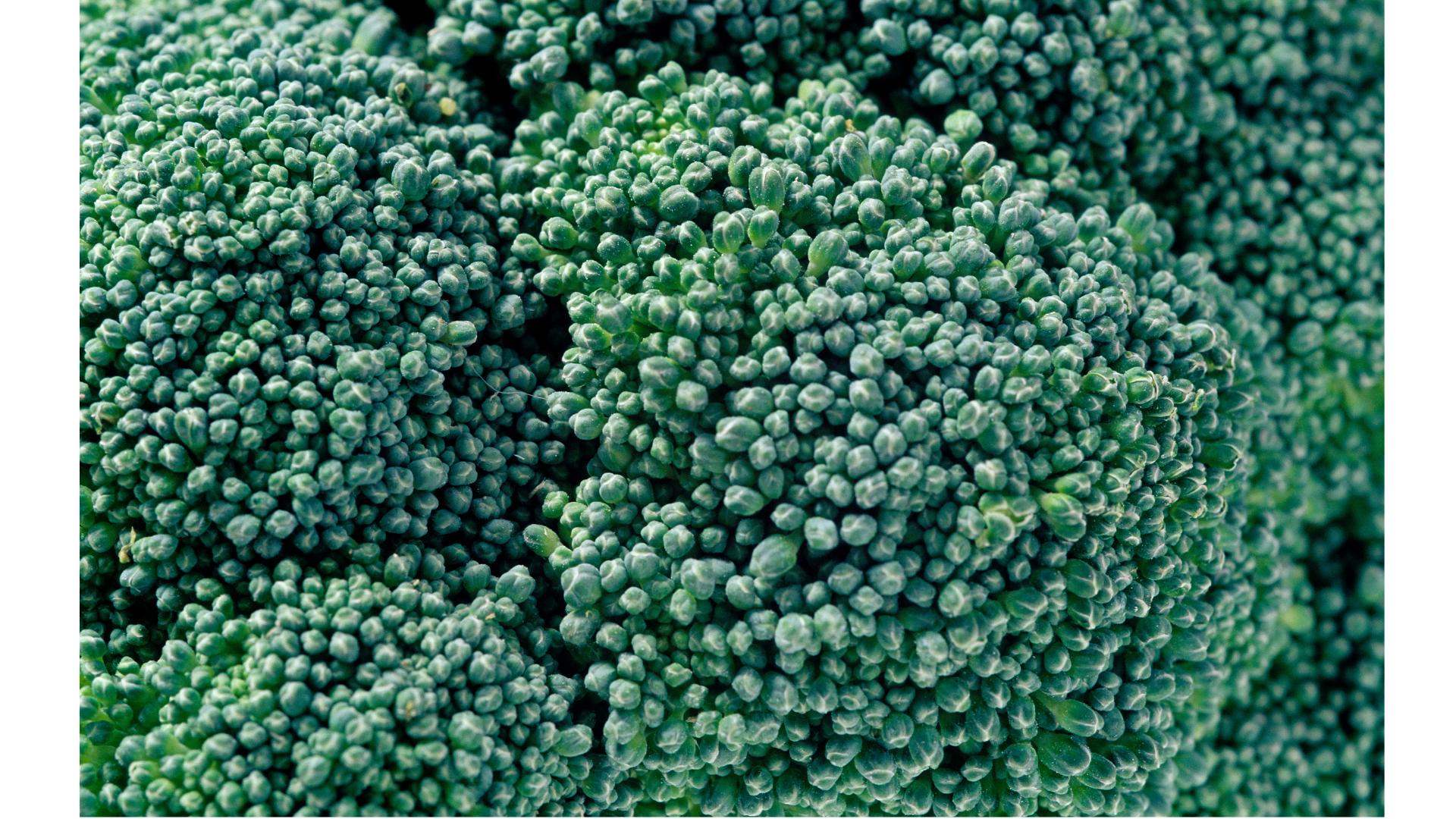ブロッコリー蕾