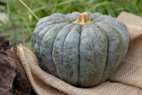 かぼちゃ丸ごと