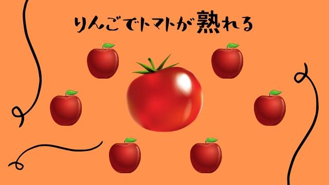 りんごで追熟トマト